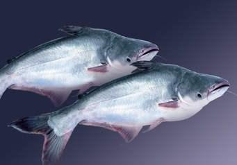 Mỹ tăng 8% lượng cá tra đông lạnh nhập khẩu