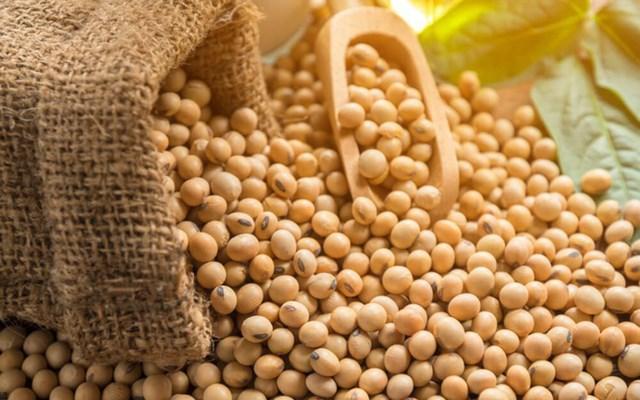 Kim ngạch nhập khẩu đậu tương 6 tháng đầu năm 2021 tăng trên 50%