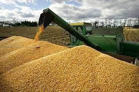 Thị trường chủ yếu cung cấp thức ăn gia súc cho Việt Nam 7 tháng năm 2021
