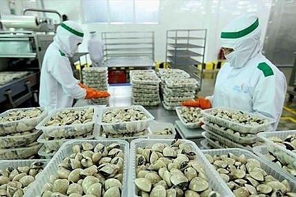 Sẵn nguyên liệu trong nước, xuất khẩu nhuyễn thể tăng mạnh