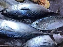 Xuất khẩu cá ngừ giảm tại nhiều thị trường chính
