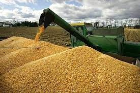 Nhập khẩu thức ăn gia súc 8 tháng đầu năm 2021 tăng gần 31%