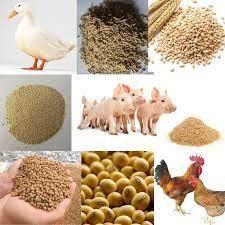 """Ngành chăn nuôi """"méo mặt"""" khi giá thức ăn chăn nuôi tiếp tục tăng cao"""