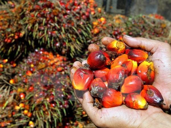 EU, Indonesia nhất trí khởi động các cuộc đàm phán về FTA