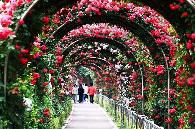 Giá vé tham dự lễ hội hoa hồng lớn nhất Việt Nam