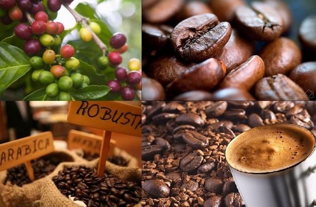 Giá cà phê kỳ hạn tại NYBOT sáng ngày 11/8/2017