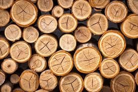 Giá gỗ xẻ tại CME sáng ngày 18/12/2017