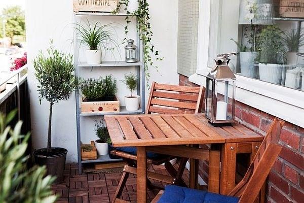 6 loài cây tuyệt đẹp giá rẻ cho nhà nhỏ thêm xinh