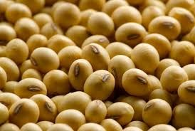 Brazil đẩy mạnh xuất khẩu đậu tương vào Trung Quốc