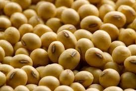 Giá đậu tương và khô đậu tương tại Trung Quốc tăng mạnh