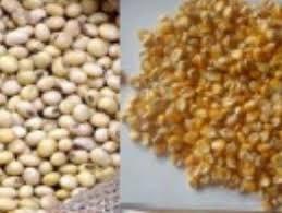 Thị trường NL TĂCN thế giới ngày 9/5: Giá ngô, đậu tương tăng phiên thứ 2 liên tiếp