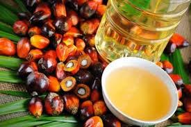 Giá dầu cọ tại Malaysia tăng 1,5% do giá dầu liên quan tăng mạnh