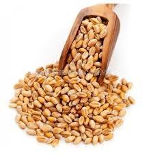 Australia lần đầu tiên nhập khẩu lúa mì trong 12 năm