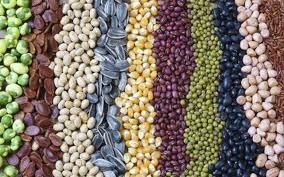 Thị trường TĂCN thế giới ngày 2/7/2019: Ngô và lúa mì đồng loạt tăng