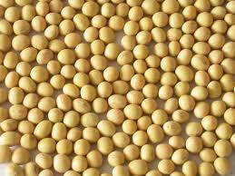 Thị trường TĂCN thế giới ngày 8/1/2020: Giá đậu tương giảm