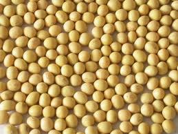Thị trường TĂCN thế giới ngày 8/6/2020: Giá đậu tương tăng do nhu cầu cao