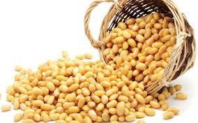 Thị trường TĂCN thế giới ngày 18/8/2020: Giá đậu tương giảm