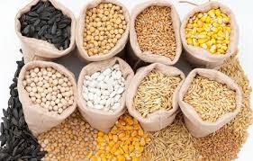Tóm lược tình hình thị trường thức ăn chăn nuôi thế giới tháng 8/2020 và dự báo