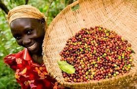 Xuất khẩu cà phê của Uganda tháng 1/2014 tăng 12,5%