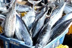 Trung Quốc và Hàn Quốc: thị trường cá ngừ mới nổi