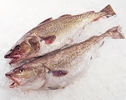 Mỹ: Giá cá rô phi tăng, cá tuyết giảm