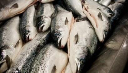 Xuất khẩu cá tuyết Na Uy sang Tây Ban Nha tăng