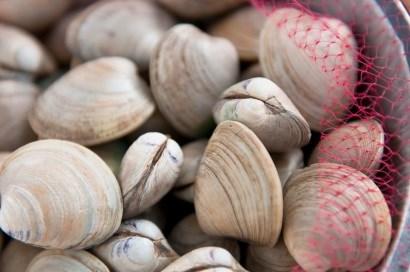 Nhập khẩu nghêu sò vào Nhật Bản và Hàn Quốc giảm