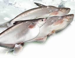 Brazil tăng nhập khẩu cá tra, giảm nhập khẩu cá minh thái