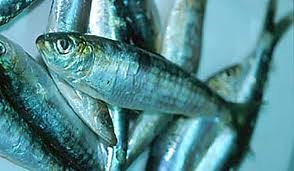 Brazil tiếp tục giảm thuế nhập khẩu cá trích đông lạnh