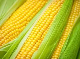 Nhật Bản gia tăng sử dụng ngô làm thức ăn chăn nuôi trong tháng 3/2014