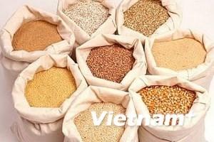 Sản lượng ngũ cốc Ấn Độ vụ 2013/14 dự báo đạt kỷ lục 264,4 triệu tấn