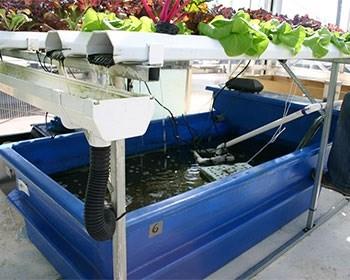 Oman: Hệ thống mới thúc đẩy nuôi trồng thủy sản