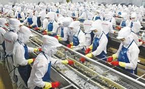 Nhật Bản: Nuôi trồng thủy sản là chìa khóa cho nguồn cung thủy sản toàn cầu