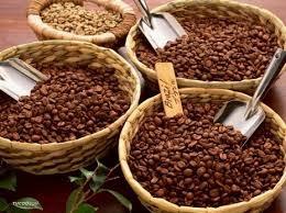 Cà phê: giá ngoại tăng, giá nội dùng dằng