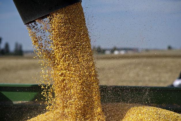 USDA: Dự báo cung cầu ngô thế giới niên vụ 2014/15