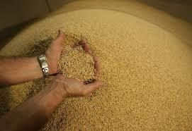 TT lúa gạo châu Á tuần tới 12/3: Gía gạo Thái giảm, gạo Việt tăng nhẹ