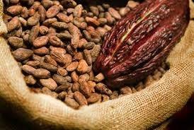 Cacao giảm xuống mức thấp nhất hơn 3 tháng, cà phê cũng giảm