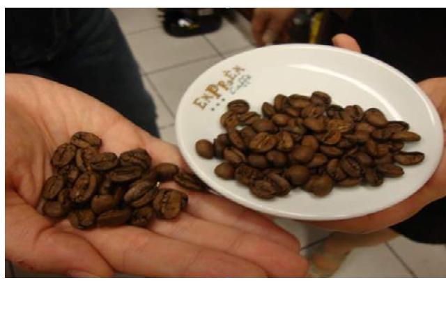 Người trồng cà phê Việt giữ hàng lại khi giá giảm