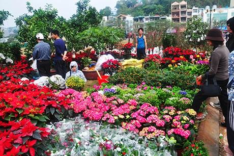 Hà Nội, TP. HCM tổ chức 177 chợ hoa Xuân