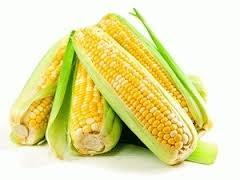 Thị trường ngũ cốc ngày 28/6: Giá ngô giảm dài nhất trong 4 tháng do nguồn cung từ Mỹ