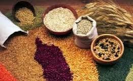 Giá đậu tương, lúa mì, ngô giảm do thời tiết Mỹ thuận lợi có thể đẩy năng suất