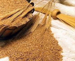 Giá lúa mì ngày 9/3 tăng 1%