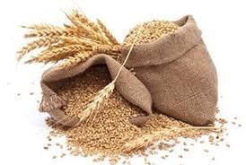 Nga dành 1,65 triệu tấn lúa mì cho xuất khẩu