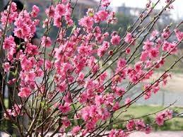 Thị trường hoa, cây cảnh những áp Tết Nguyên Đán