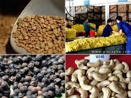 Thị trường nông sản trong nước tuần đến ngày 12/1/2015
