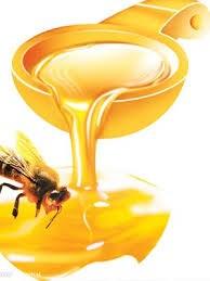 Tình hình xuất khẩu mật ong Việt Nam vào Mỹ năm 2013