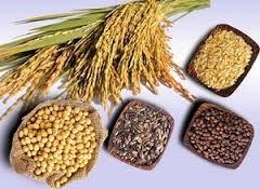 Tình hình nhập khẩu nguyên liệu sản xuất thức ăn chăn nuôi đầu năm 2014