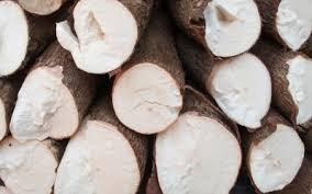 Xuất khẩu sắn tháng 1/2015 tăng cả lượng và trị giá