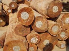 Tình hình xuất khẩu gỗ, sản phẩm gỗ và dự báo