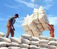 Xuất khẩu gạo tháng đầu năm sụt giảm